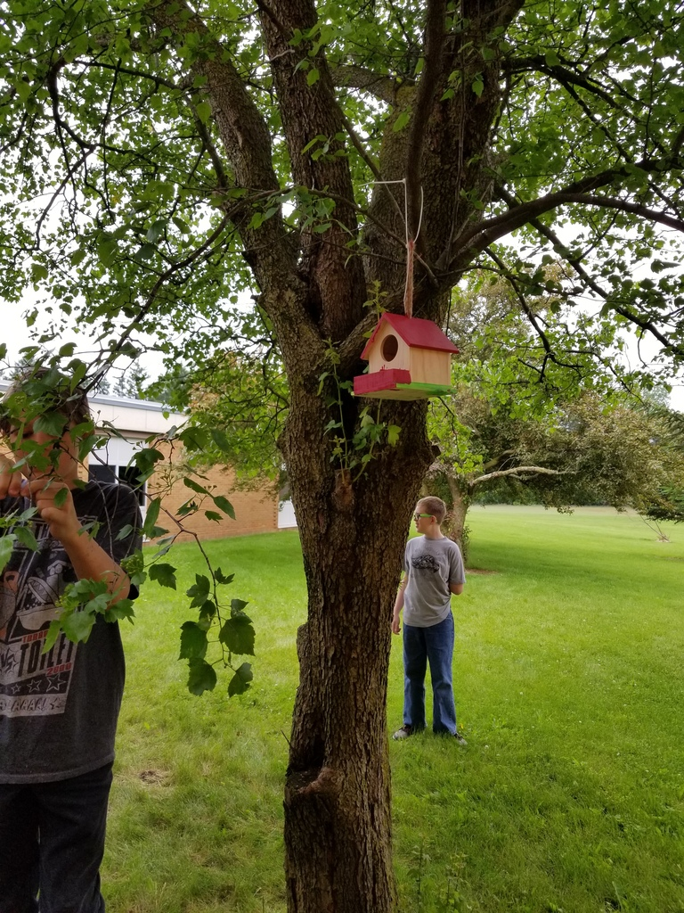 Bird House Making
